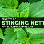 Top 50 Benefits Of Stinging Nettle For Skin, Hair and Health