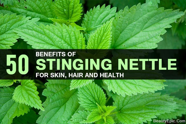 Top 50 Benefits Of Stinging Nettle For Skin Hair And Health