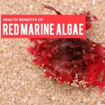 Top 8 Benefits of Red Marine Algae – Why It's Good for You