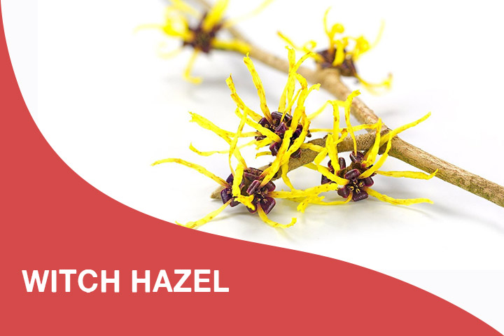 witch hazel for dry itchy scalp