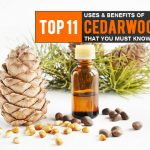 11 Surprising Uses & Benefits Of Cedarwood Oil That You Must Know