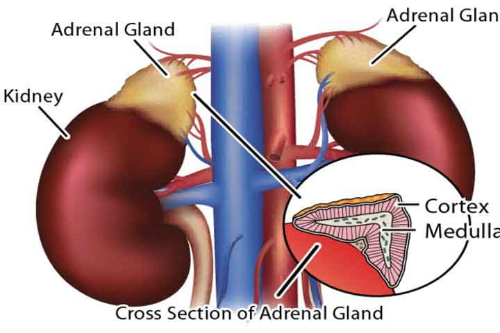 what is adrenal fatigue