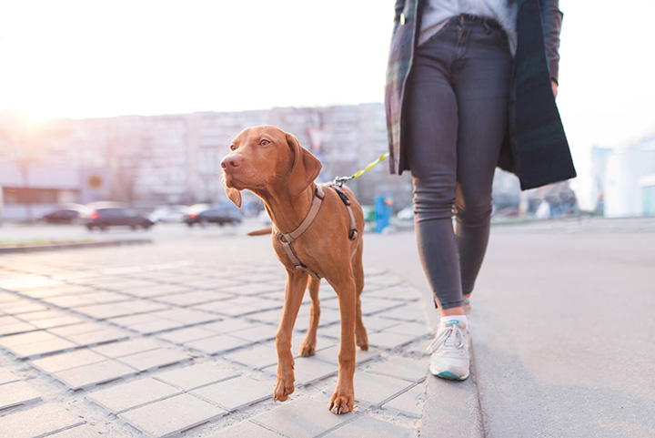walking with dog for calories burn
