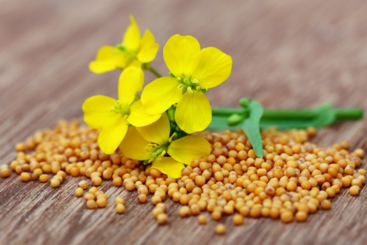 mustard for heartburn relief