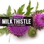 10 Shocking Side Effects of Milk Thistle You Need To Know About