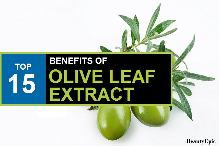 Top 15 Proven Benefits & Uses of Olive Leaf Extract for Health & Beauty