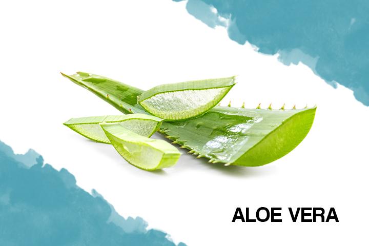 aloe vera for dry hair